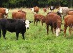 Казахстан: Поголовье скота снижается