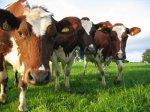 Животноводы боятся, что не получат кредиты на 15 лет, несмотря на госсубсидии
