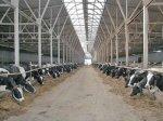 Фермеры Мордовии получают гранты на строительство животноводческих ферм