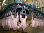 Производство мяса птицы в Украине выросло на 5,5%