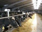 Строительство животноводческих ферм в Нижегородской области выросло