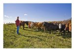 Канадское поголовье скота может восстановиться быстрее на фоне роста экспортного спроса
