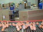 Уссурийская птицефабрика модернизирует яичное производство