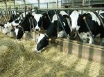 Украина: экспорт свежего мяса КРС составил 803 тонн в августе