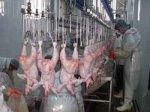 Украина в 1,5 раза увеличит производство мяса птицы