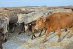 В Волгоградской области развивают альтернативное животноводство