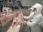 Аналитики предрекают светлое будущее китайскому птицеводству