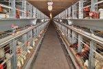Производственная мощь птицефабрики в Пензенской области увеличена вдвое