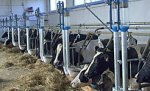 Воронежское животноводство несет потери, а промышленность не демонстрирует убедительного роста