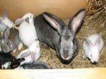 Свинокомплекс в Карачаево-Черкесии перепрофилируют в производство мяса кролика