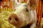 АгроПромКомплектация строит свиноферму