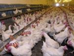 Свердловская птицефабрика подтвердила международный уровень качества выпускаемой продукции
