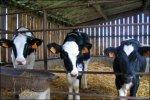 Животноводческая ферма за четверть миллиарда появится в Белореченском районе Кубани