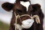 Белоруссия запретила ввоз скота из Израиля из-за ящура