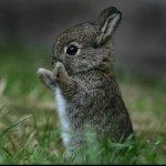На Украине налаживают разведение кроликов