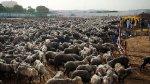 Пакистан ввел полный запрет на экспорт живых животных