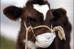 160 новых вспышек опасных болезней животных зарегистрировано в мире за октябрь 2013 года