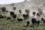 В США традиционный метод производства говядины признан экспертами безопасным и устойчивым
