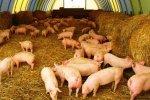 В Саратовской области построен свинокомплекс