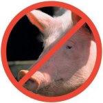 Свиноводы Литвы опасаются ограничений на экспорт в связи с африканской чумой свиней