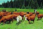 Основные вопросы рынка крупного рогатого скота США на 2014 год