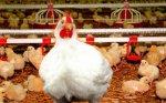 В Республике Калмыкия будут построены птицефабрика и молокозавод