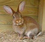 В Тверской области будет увеличено производство крольчатины