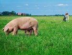 Правительство Нижегородской области в 2014 году выделит 1,43 млрд. рублей на поддержку животноводства