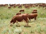 В Белоруссии самая успешная отрасль сельского хозяйства — животноводство