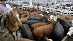 Производство мяса – одна из основных причин изменения климата