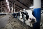 В Коми крупные фермы работают в соответствии с требованиями ВТО