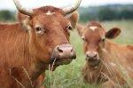Почему крупные ростовские агрохолдинги ищут причины, чтобы не заниматься животноводством?