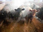 Новосибирская область инвестирует в развитие мясного животноводства 2,5 млрд рублей
