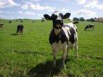 Как спасти российский генофонд сельскохозяйственных животных