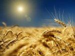 Рентабельность агросектора в России резко снизилась в 2013 году