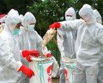 Южная Корея выбраковала более 6 процентов поголовья птиц из-за птичьего гриппа