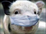 Бразилия прекратила импорт свиней из США