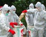 В Японии уничтожат 100 тысяч кур из-за птичьего гриппа на одной из местных птицефабрик