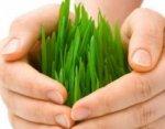 Сельхозпроизводителям Кабардино-Балкарии выделят 26 млн рублей на агрострахование