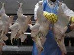 В России выпуск мяса и субпродуктов птицы в марте увеличился до 318 тыс. тонн