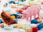 Антибиотикам в кормах нашли замену