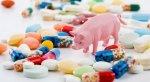 Нидерланды сокращают использование антибиотиков в животноводстве и птицеводстве