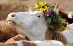 До конца текущего года казахстанские фермеры могут отправить на экспорт порядка 10 тыс тонн говядины