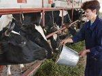 На поддержку животноводов Ростовской области выделено 31 млн рублей