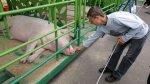 Минэкономики Беларуси предписало регионам снизить цены на свинину