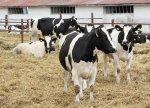 Беларусь предлагает Амурской области помощь в создании мясо-молочного кластера