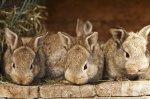 Маленький кролик из Пензы накормит большую страну