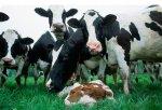 ЕЭК разработала проект Соглашения о политике в области племенного животноводства стран-членов ТС и ЕЭП