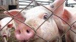 Беларусь не верит, что Россельхознадзор нашел в оршанской колбасе геном АЧС