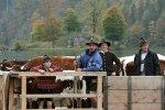 Фермеры Европы потеряли 5 миллиардов евро из-за санкций против России